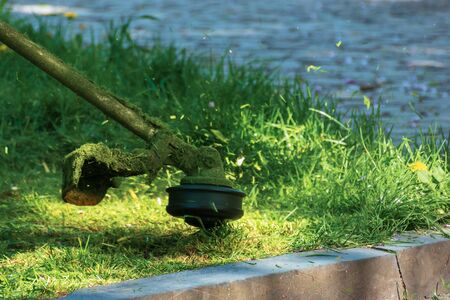 professional grass mowing in the park. green lawn with yellow dandelions. close up shot of gasoline brush cutter head with nylon line trimming fresh green grass to small pieces Stock Photo