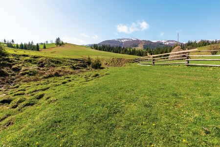 transcarpathian rural landscape in springtime. haystack behind the wooden fence on the grassy meadow. spruce forest on hills rolling in to the distant mountain. borzhava ridge with snow capped tops