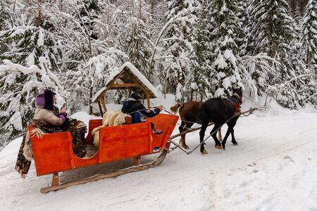 Synevyr national park, ukraine - 11 FEB 2018: winter holiday fun. riding horses in red open sleigh through forest. nature scenery with spruce trees in snow Stock Photo - 137010914