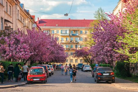 Uzhhorod, ukraine - 18 APR, 2019: streets of small town in cherry blossom. wonderful sunny afternoon with some clouds on the sky. happy tourists making selfies, cars parked on the road side