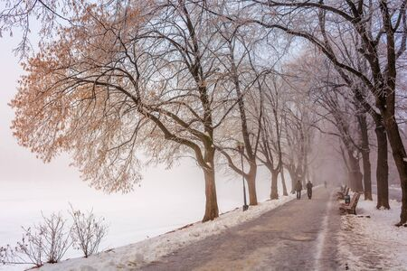 the longest linden alley in winter. beautiful urban scenery of embankment covered in snow. enchanting foggy weather in the morning. trees in hoarfrost