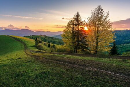 carpathian rural landscape at sunset in springtime. beautiful countryside with tree by the road. dirt pathway along the grassy rolling hills. distant ridge beneath a sky with clouds glowing before dusk Stock Photo
