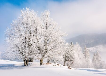 tees in hoarfrost on a snow covered meadow. fantastic winter background on a misty morning weather with blue sky. minimalism concept in fairy tale landscape