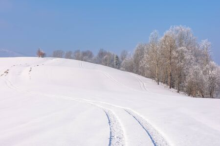 trees in hoarfrost on snow covered meadow. sunny forenoon of mountainous countryside. hazy atmosphere with blue sky. calm winter nature scenery. track on the surface