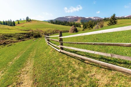 transcarpathian country landscape in springtime. haystack behind the wooden fence on the grassy meadow. spruce forest on hills rolling in to the distant mountain. borzhava ridge with snow capped tops