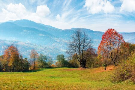 beautiful autumn morning in mountains. misty atmosphere with clouds on the sky. trees on the hillside in colorful foliage. weathered grass on the slopes. haze above the distant valley. magical moments