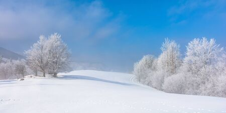 bunch of trees in hoarfrost on snow covered hill. sunny morning panorama . misty weather with blue sky. magical winter moments. beautiful nature background of white season in carpathian mountains