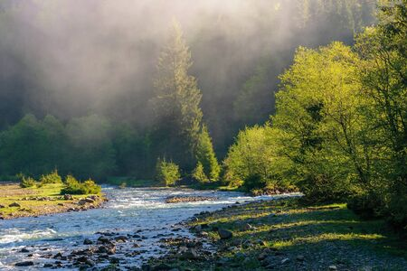mountain river among the forest. wonderful nature scenery on a misty sunrise in springtime. waters of a rapid flow in morning light. estuary of tereblya and ozeryanka rivers