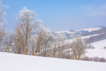 trees in hoarfrost on snow covered meadow. sunny forenoon of mountainous landscape. hazy atmosphere with blue sky. calm winter nature scenery. beautiful countryside