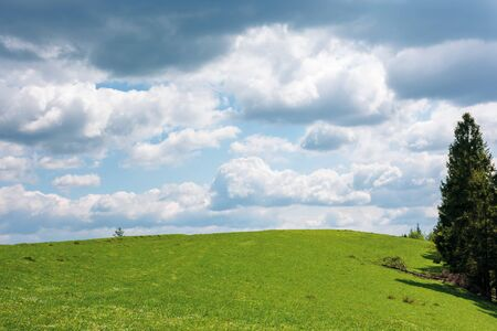 grassy meadow beneath a cloudy sky. wonderful sunny weather in springtime. beautiful countryside scenery with pasture on the hill near the spruce forest