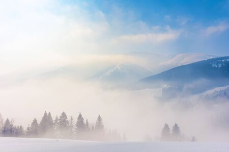 blizzard in mountains. magic scenery with clouds and mist on a sunny winter morning. trees in fog on a snow covered meadow. borzhava ridge in the distance. cold weather forecast concept