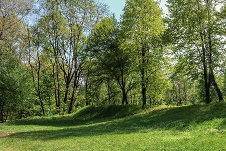 green grassy lawn on a hump in the park. wonderful sunny weather in springtime Stock Photo