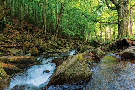 rapid stream among the rocks in the forest. beautiful nature scenery in springtime. green foliage on trees and moss on boulders.