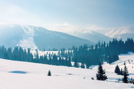 mountainous countryside in wintertime. stunning rural landscape on a bright sunny day. spruce forest on snow covered rolling hills. beautiful scenery of borzhava ridge
