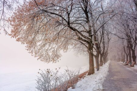 the longest linden alley in winter. beautiful urban scenery of embankment covered in snow and brown fallen foliage. enchanting misty weather in the morning. trees in hoarfrost Stock Photo