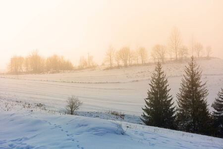 mountainous countryside in fog. glowing winter mist at sunrise. spruce trees on the snow covered meadow. mysterious scenery. bad weather concept