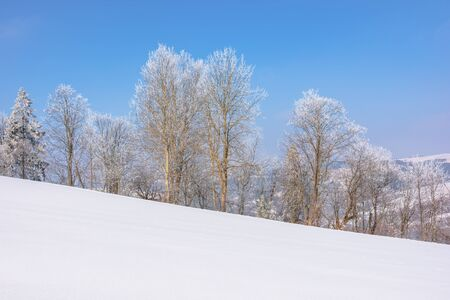 trees in hoarfrost on snow covered meadow. sunny forenoon of mountainous countryside. hazy atmosphere with blue sky. calm winter nature scenery. beautiful scenery
