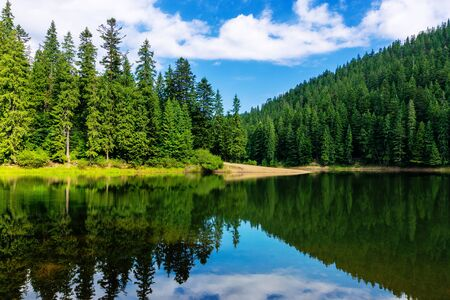mountain lake in summertime. great outdoor nature scenery. coniferous forest with tall trees on the shore reflecting in clear water. deep blue sky with clouds. beautiful landscape Stock Photo