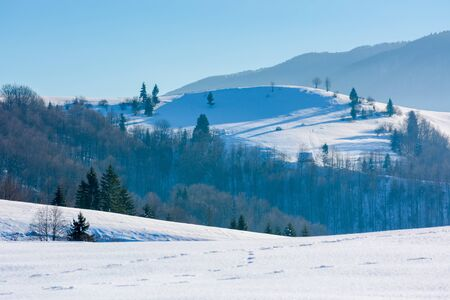 mountainous countryside in wintertime. trees on snow covered hills and meadows. wonderful weather on a bright sunny day in winter. beautiful carpathian rural landscape. cloudless blue sky.