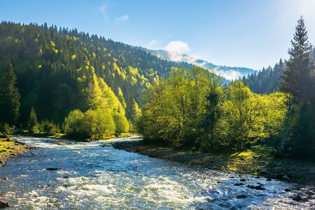 mountain river among the forest. wonderful nature scenery on a misty sunrise in springtime. waters of a rapid flow in morning light. estuary of tereblya and ozeryanka rivers Stock Photo