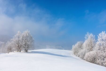 bunch of trees in hoarfrost on snow covered hill. sunny morning landscape. misty weather with blue sky. beautiful fairy tale winter scenery of white season in carpathian mountains Stock fotó