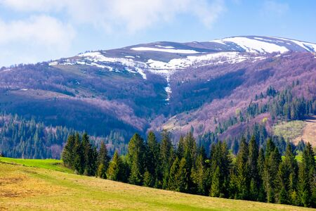carpathian countryside in springtime. green grass on the meadow. coniferous forest on the hills. snow on the mountain top. sunny weather with clouds on the blue sky. podobovec, ukraine