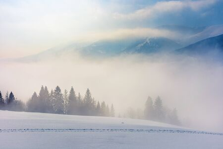 blizzard in mountains. magic scenery with clouds and mist on a sunny winter day. trees in fog on a snow covered meadow. borzhava ridge in the distance. cold weather forecast concept