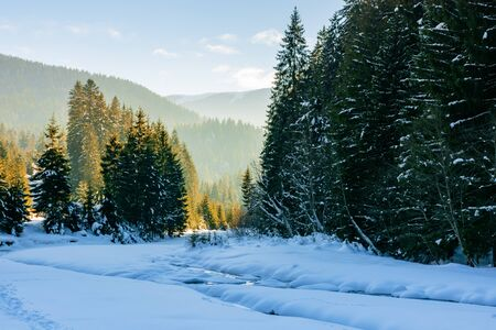 frozen and snow covered mountain river. carpathian winter landscape in afternoon light. spruce forest on the river bank. Stock Photo - 135534533