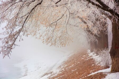 the longest linden alley in winter. beautiful background of embankment covered in snow and brown fallen foliage. enchanting foggy scenery in the morning. trees in hoarfrost