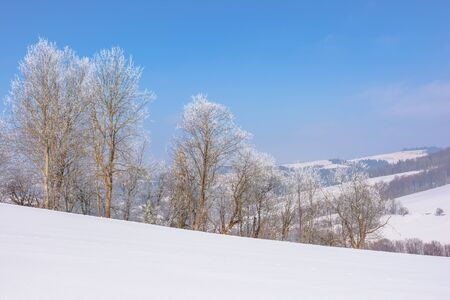 trees in hoarfrost on snow covered meadow. sunny forenoon of mountainous landscape. hazy atmosphere with blue sky. calm winter nature scenery. beautiful scenery Stock Photo