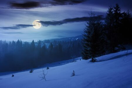 winter fairy tale scenery in mountains at night. beautiful nature scenery with coniferous forest in fog and some spruce trees on the snow covered slope. wonderful Christmas mood in full moon light