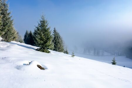 winter landscape at sunrise. spruce forest on a snow covered hill in fog. sunny weather with blue sky