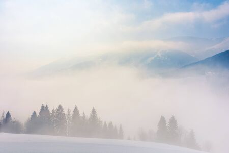 blizzard in mountains. magic scenery with clouds and fog on a sunny winter morning. trees in mist on a snow covered meadow. borzhava ridge in the distance. cold weather forecast concept Stock Photo - 137214017