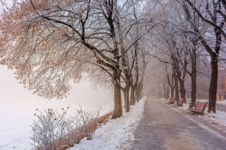 the longest linden alley in winter. beautiful urban scenery of embankment covered in snow and brown fallen foliage. enchanting foggy weather in the morning. trees in hoarfrost Stock Photo