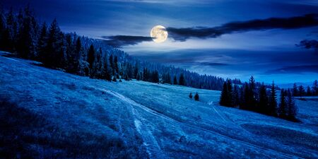 forested carpathian mountains in summer at night. fir trees on the grassy slope. weather with clouds on the sky in full moon light. foo path uphill. hiking concept background