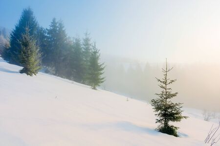 winter fairy tale landscape in mountains. beautiful nature scenery with coniferous forest in fog and some spruce trees on the snow covered slope. wonderful Christmas mood on misty morning Stock Photo - 137064978