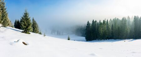 winter landscape at sunrise. spruce forest on a snow covered hill in fog. sunny panorama with blue sky Stock Photo
