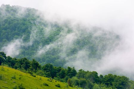 clouds rise above the forested forest. high volume humidity weather. foggy atmosphere. mysterious nature background in the morning