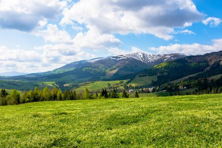 mountainous countryside landscape in spring. grassy meadow on top of a hill. mountain ridge with snow capped tops in the distance. sunny weather with clouds on the blue sky