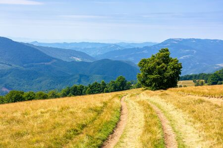 mountainous countryside in summertime. country road down the hill through the grassy meadow. trees along the path. sunny weather with cloudless sky. explore back country concept