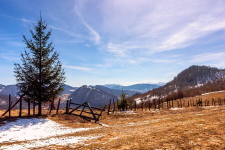 spruce trees on the mountain hill. early springtime sunny weather with clouds on the sky. snow and grass on the meadow. valley and ridge in the distance Stock Photo