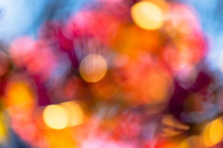 abstract nature blur. bokeh of blossom and foliage in sunlight. bright backlit background