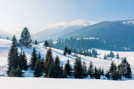 mountainous landscape in wintertime. amazing acenery on a bright sunny day. spruce forest on snow covered rolling hills. beautiful scenery of borzhava ridge Stock Photo