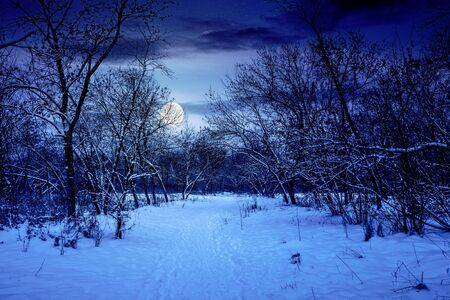 winter forest at night. trees in full moon light Stock Photo