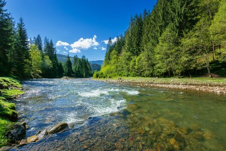 nature scene with mountain river. spring vacation in sunny valley of synevyr national park, ukraine. grassy meadow on the shore, ridge in the distance. beauty of tranquil ecology environment Stock Photo