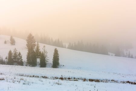 mountainous countryside in fog. glowing winter mist at sunrise. spruce trees on the snow covered meadow. mysterious scenery. bad weather concept Stock Photo - 137368114