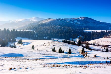 mountainous countryside in wintertime. snow covered rural fields on rolling hills with spruce forest. sunny and frosty afternoon. Stock Photo