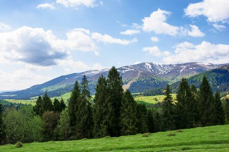 mountain landscape in spring. fir forest on the green grassy meadow. ridge with snow capped tops in the distance. wonderful sunny weather with fluffy clouds on the blue sky Stock Photo - 138192002