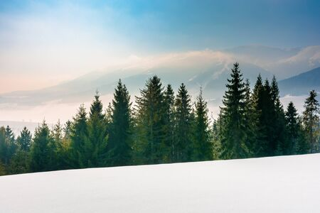 spruce forest on a snow covered mountain meadow. beautiful winter landscape with distant ridge. wonderful sunny weather with fog and mist in the valley. fantastic scenery of carpathian mountains