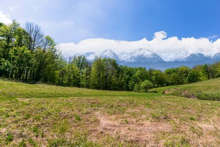idyllic springtime landscape composite. meadow among the forest. high tatra mountain ridge with snow capped peaks in the  distance. sunny weather with clouds on the sky. beauty of nature concept 免版税图像